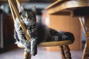 イスでまったりする猫