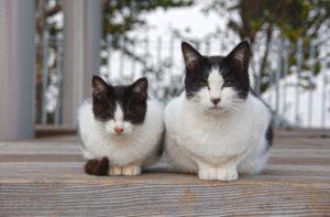 並んでいる猫の親子